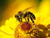 installer une ruche dans son jardin. Black Bedroom Furniture Sets. Home Design Ideas