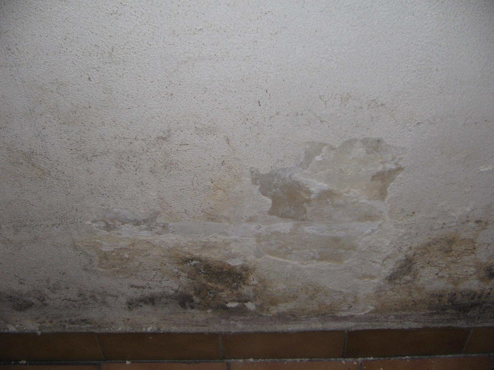 Peinture sur mur humide peinture antihumidit v blanc l for Peinture sur carrelage mural