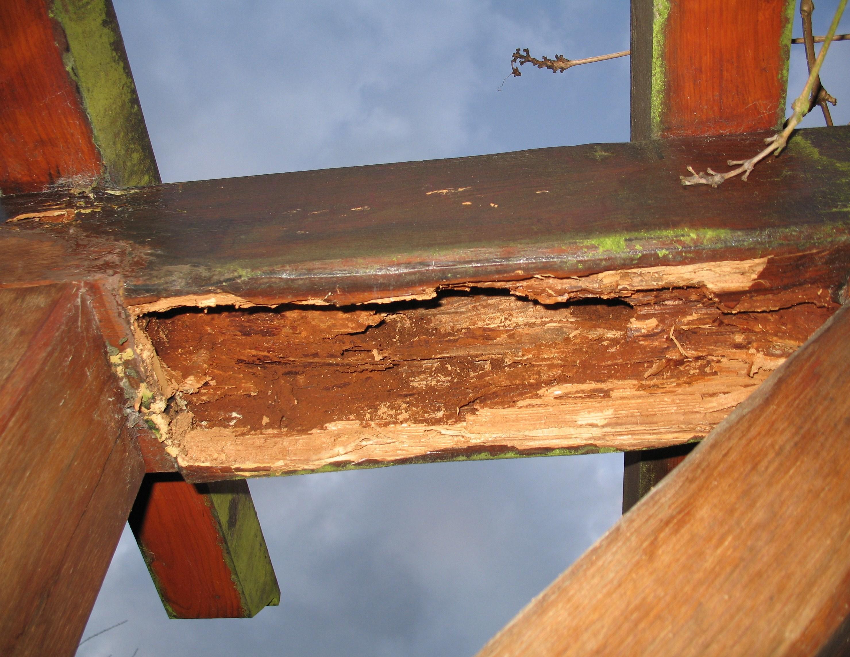 Réparer pergola en bois