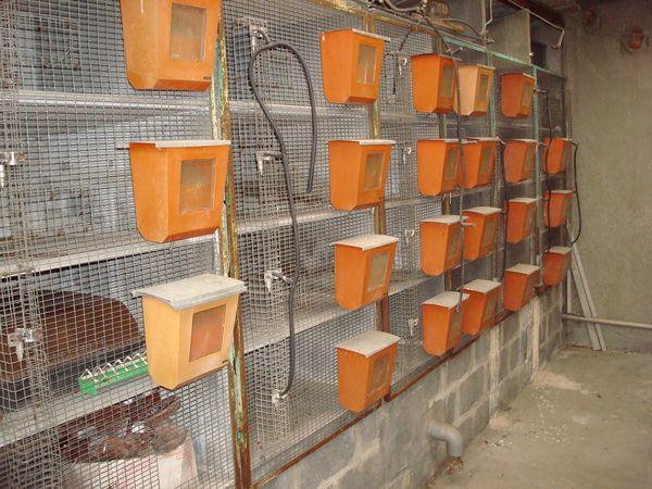 Fabrication d une cage à lapin 68a28363d12a