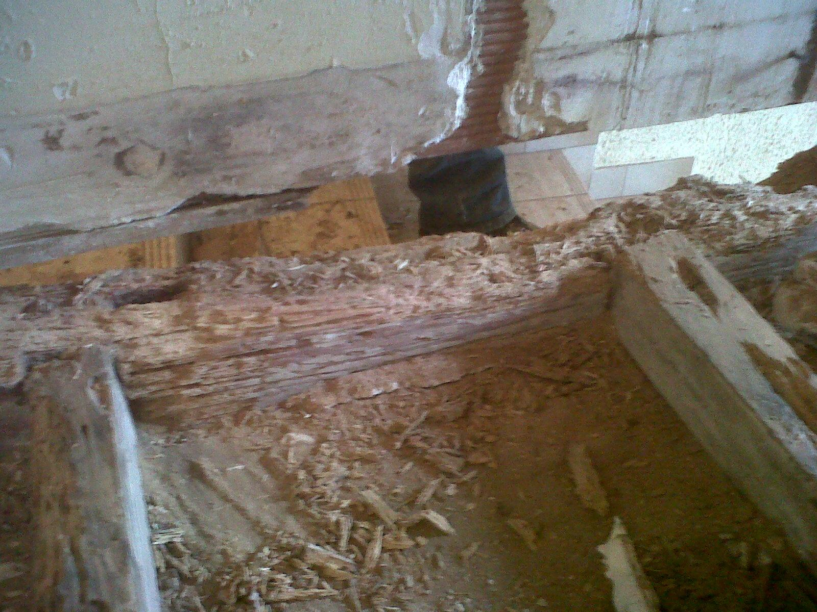 urgent besoin d 39 aide pour vrillettes dans les bois. Black Bedroom Furniture Sets. Home Design Ideas