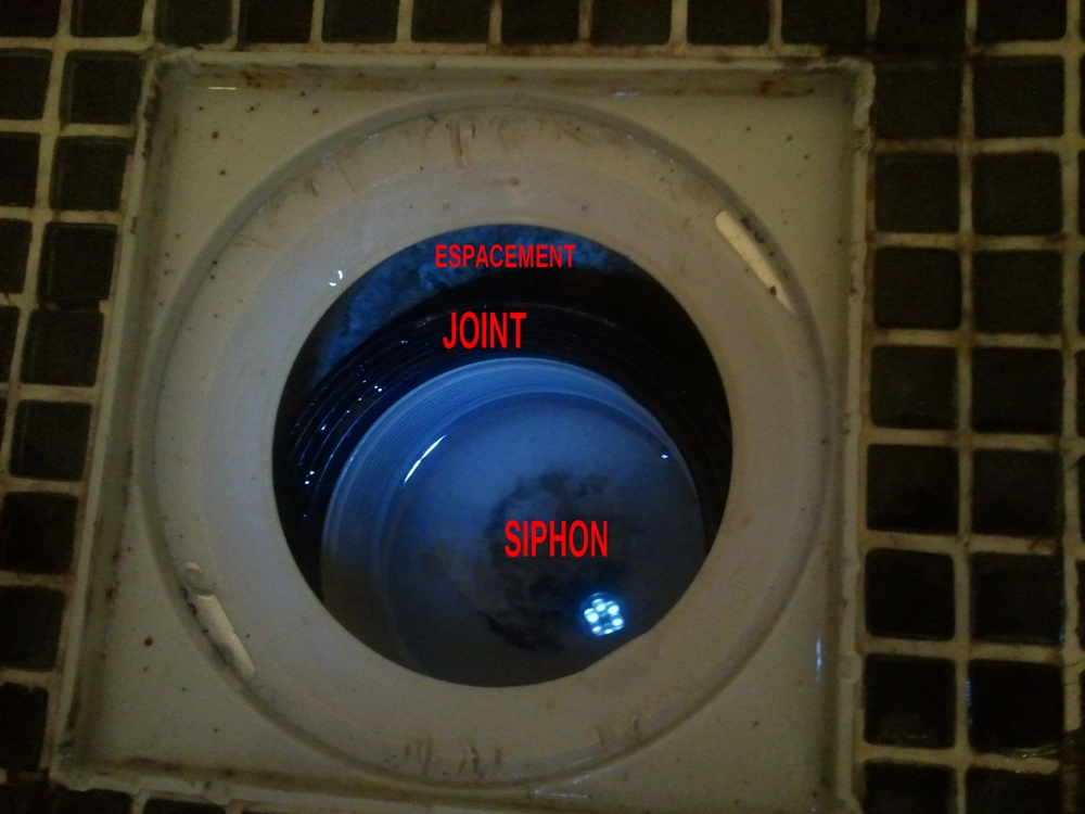 Probl me siphon douche italienne - Siphon de douche italienne ...