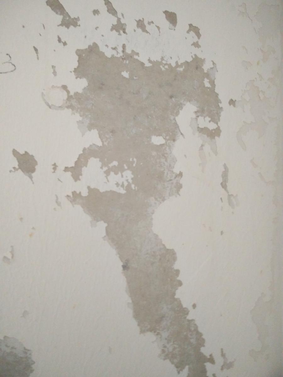 Comment r nover un mur en placo avant de peindre for Peindre sur du placo