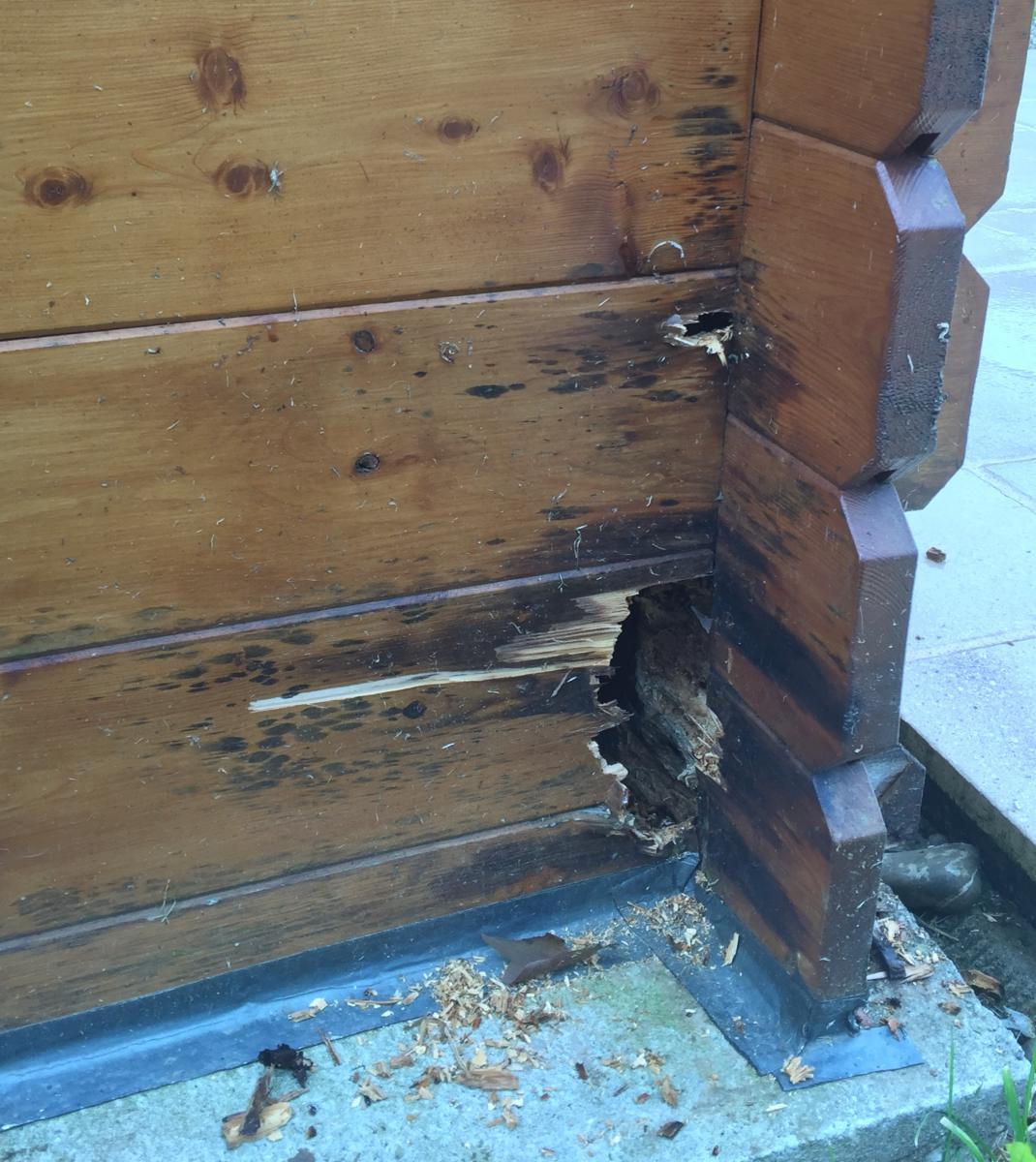 Probl me avec abri de jardin - Construire un auvent de porte ...