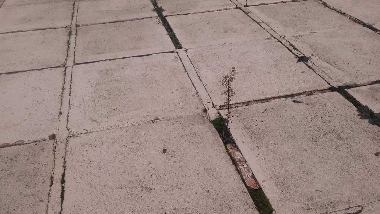 reparer fissure dalle bton terrasse excellent fissure horizontale la pousse du sol with reparer. Black Bedroom Furniture Sets. Home Design Ideas