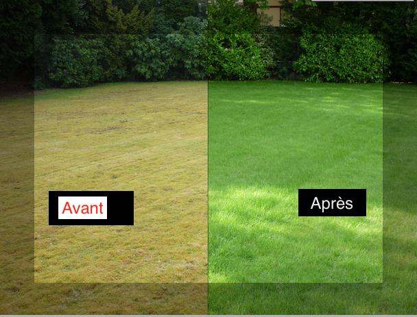Comment supprimer la mousse de votre pelouse sans produit for Supprimer la mousse de la pelouse