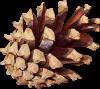 avatar - PommeDePin